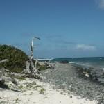 Côte rocheuse de l'ilet Pinel