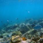 Les fonds sous-marins de Anse Figuier