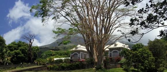 Martinique Depaz